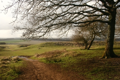 Scenic Walks at Badbury Rings