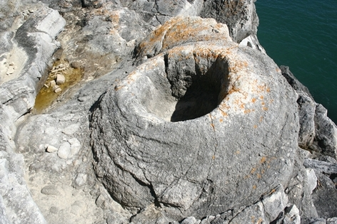 The Fossil Forest Lulworth Cove Dorset Www