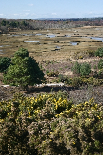 Scenic walks at Arne Nature Reserve