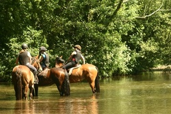 Horses in the ford at Moreton
